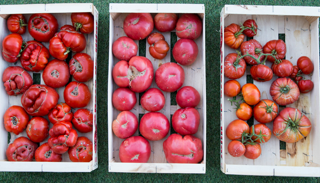 Floren ha recuperado una variedad de tomate de Tudela y lo ha convertido en uno de sus platos estrella.