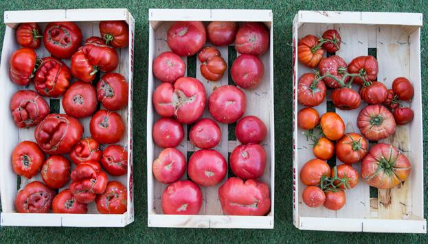Pues sí, aquí hay tomate… y del bueno. ¿A quién no le apetece dar un bocado a uno?