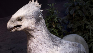 jb2_-_buckbeak_the_hippogriff-copia
