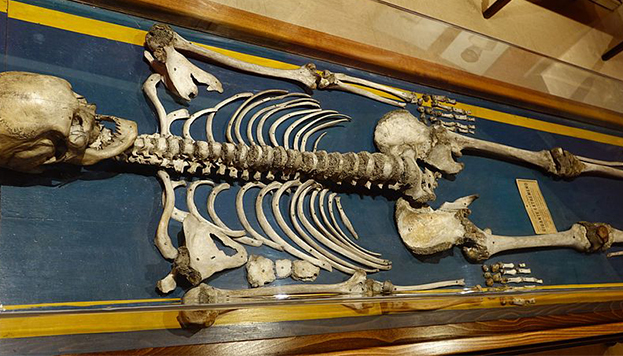 Esqueleto del gigante extremeño en el Museo Nacional de Antropología