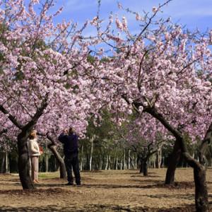 Madrid y sus quintas de recreo
