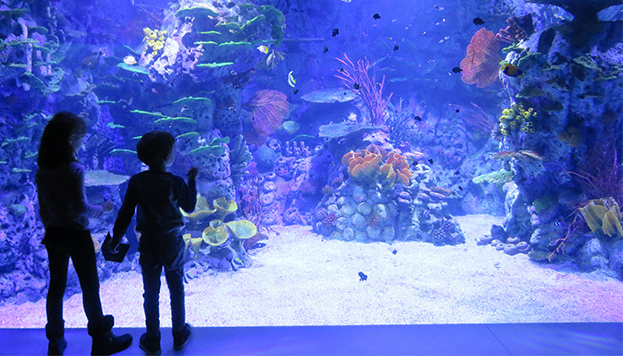 © Atlantis Aquarium Madrid